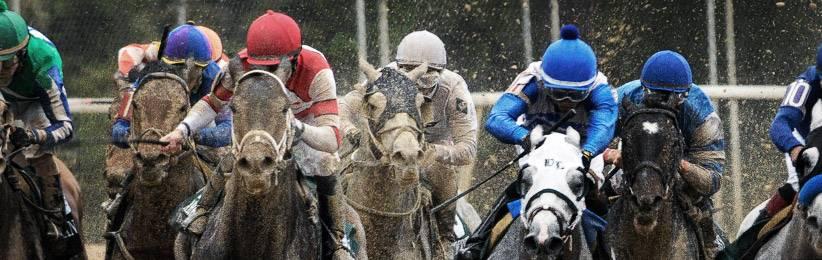 bodog horse racing betting